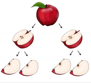 Fraction activity with apples